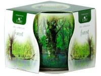 Sklo Dekor 75mm Forest vonná svíčka v krabičce