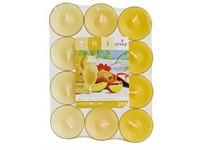 Spaas Čajové 24ks Tri Mango bellini vonné svíčky (plato)