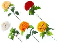 Chryzanténa 1 květ mix barev