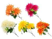 Chryzanténa 3 květy  mix barev
