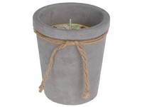 Citronella v květináči 100x115 mm cement