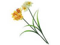 Narcis 400 mm s listy a květy