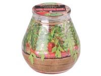 Citronela ve skle 90x94 mm  design bylinky cherry rajčátka vonná svíčka