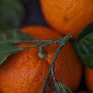 Black Amber & Citrus