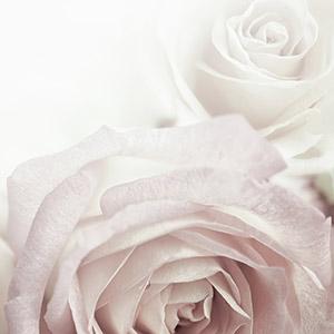 Rose Madelaine